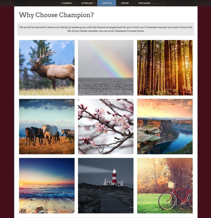 WordPress Webpage